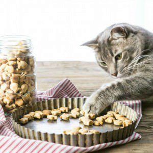 3 Ingredient Salmon Cat Treats