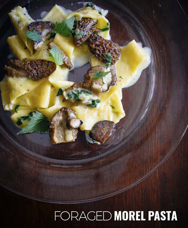 Easy Morel Pasta - Foraging Wild Foods in Grey County