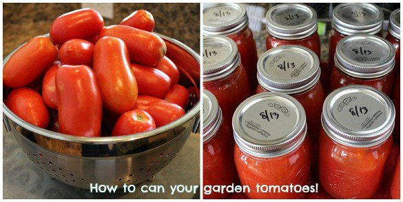 How to can your garden tomatoes!